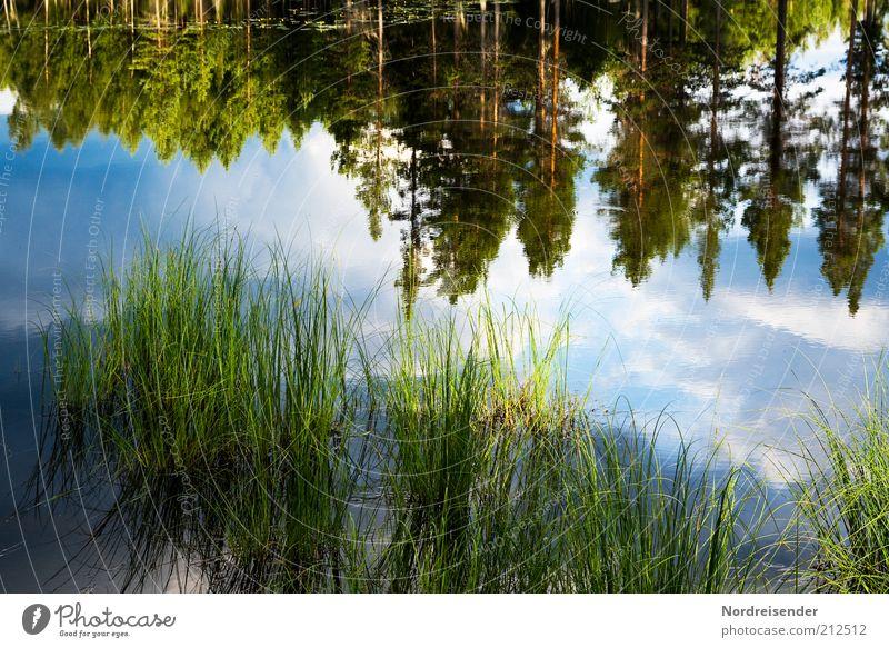 Eintauchen Natur Wasser Sommer Wolken ruhig Einsamkeit Erholung Freiheit Landschaft Umwelt Gras Stimmung See Zufriedenheit Ausflug Lifestyle