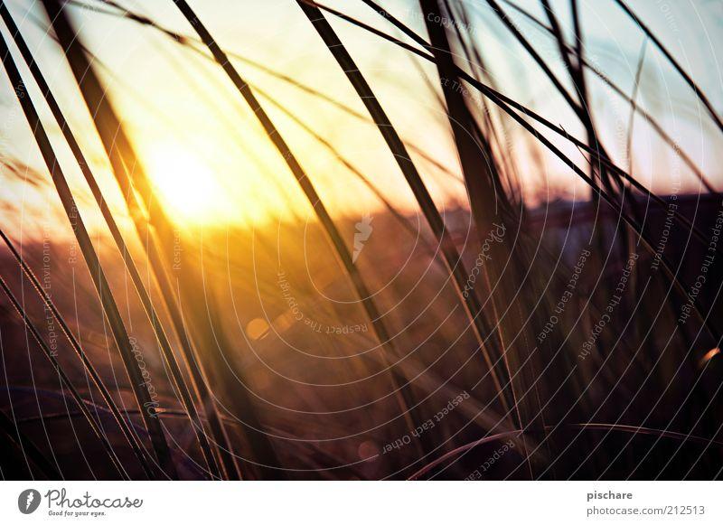 Feeling Good Natur schön Sonne Pflanze Sommer Gras Glück Wärme Landschaft Zufriedenheit Umwelt Horizont ästhetisch retro Sträucher Kitsch