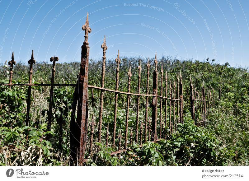 Einbahnstraße Sträucher Wildpflanze Unkraut Wildnis verwildert Garten Zaun Zaunpfahl Friedhof Grab ruhig Hoffnung Glaube demütig Traurigkeit Trauer Tod Ewigkeit