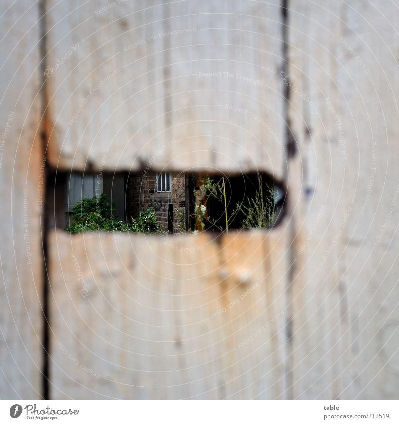 Einblick Häusliches Leben Haus Garten Einwurfschlitz Hof Stein Holz alt dunkel grau Verfall verfallen Durchblick Neugier geschlossen Farbfoto Außenaufnahme