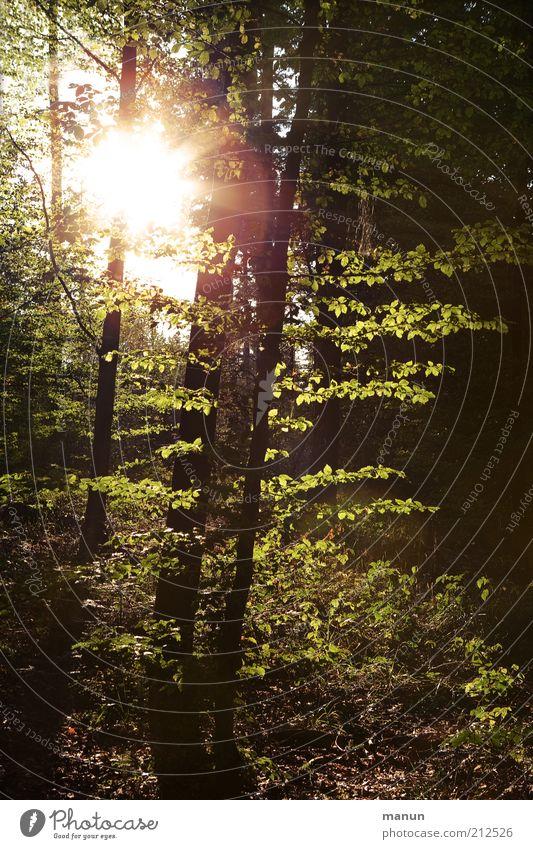 Beleuchtung Natur Sommer Baum Sonne Einsamkeit Landschaft Wald Umwelt Tod Traurigkeit natürlich Erde Wachstum Ausflug Hoffnung Trauer