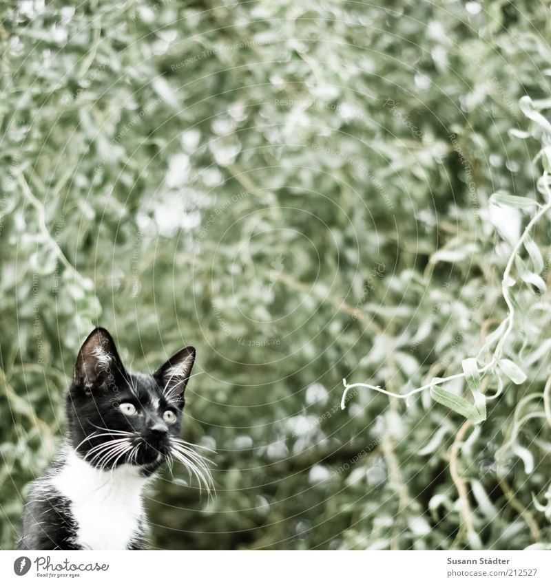 Jagdrevier Natur Baum schwarz Tier Katze Denken warten beobachten Fell Konzentration Jagd Baumkrone Haustier Schrecken Tarnung Blick nach oben