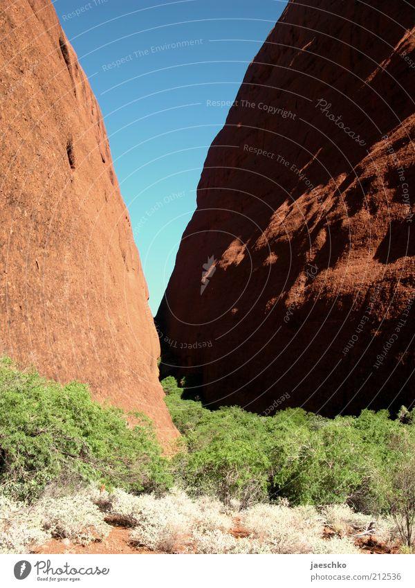 V Umwelt Natur Urelemente Felsen Schlucht Steppe rot Kata Tjuta Stein Felsspalten Australien trocken heiß Wärme Geologie Faltengebirge Sandstein Sträucher blau