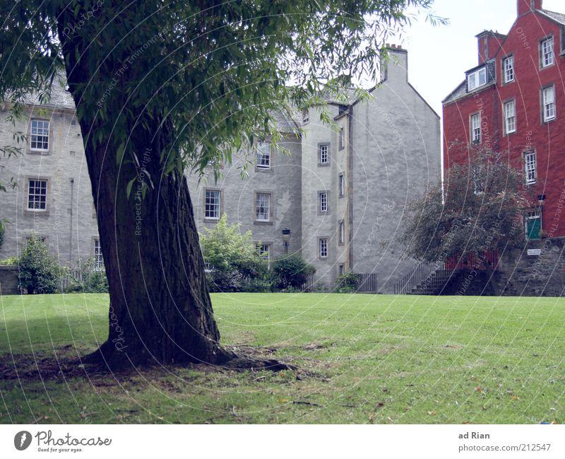 verwurzelt Baum Stadt Haus Wiese Gras Park Gebäude Architektur Fassade Treppe Baumstamm eckig Schottland gepflegt Edinburgh