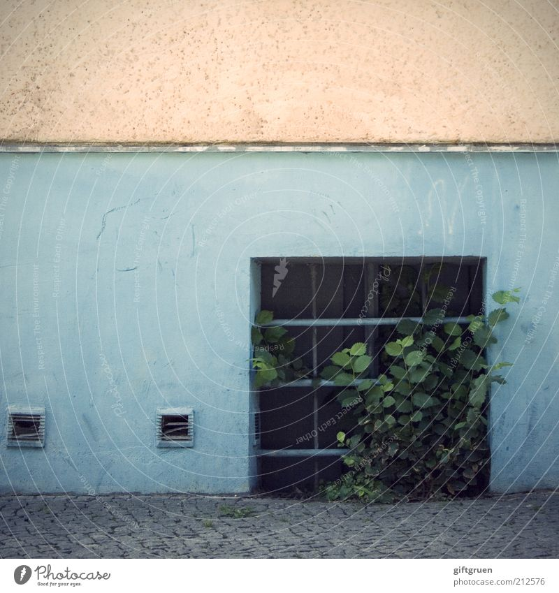 kellerkind blau Pflanze Blatt Haus Straße Fenster Wand Gebäude Mauer rosa Fassade Armut Wachstum Sträucher einfach Bauwerk