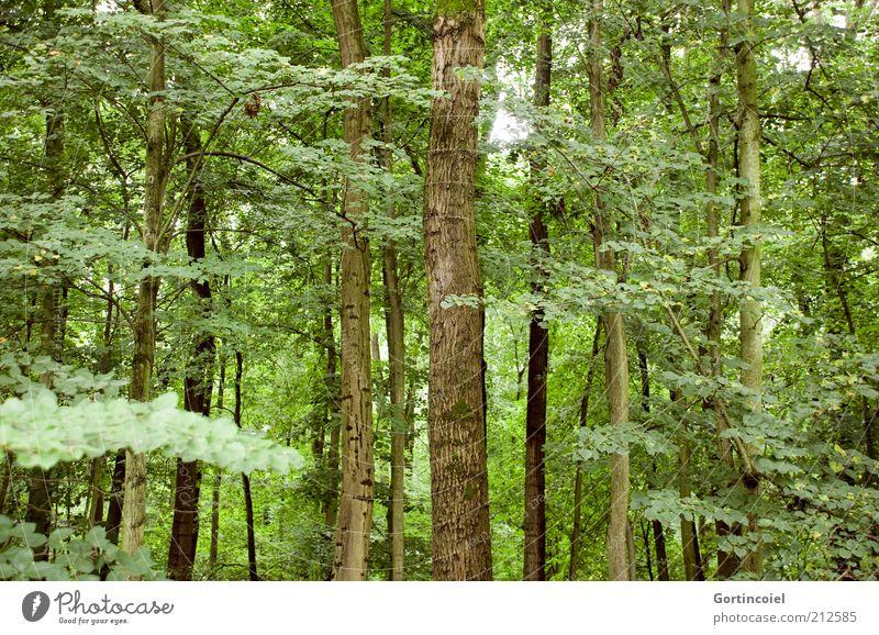 Wald Umwelt Natur Klima Pflanze Baum Blatt grün Baumstamm Laubwald Ast Klimawandel Farbfoto Außenaufnahme Menschenleer mehrere
