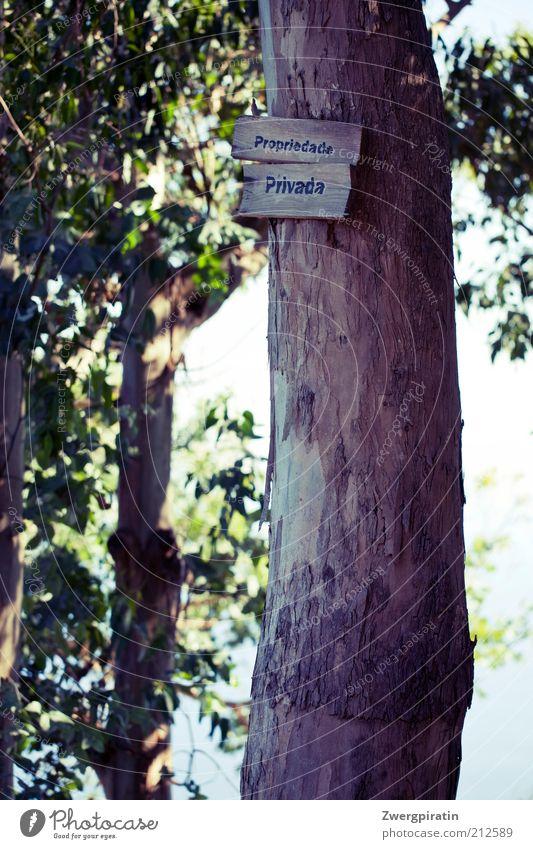 Propriedade Privada Natur Baum Pflanze Umwelt Schilder & Markierungen Hinweisschild Baumstamm Grundbesitz privat Grünpflanze Privatsphäre