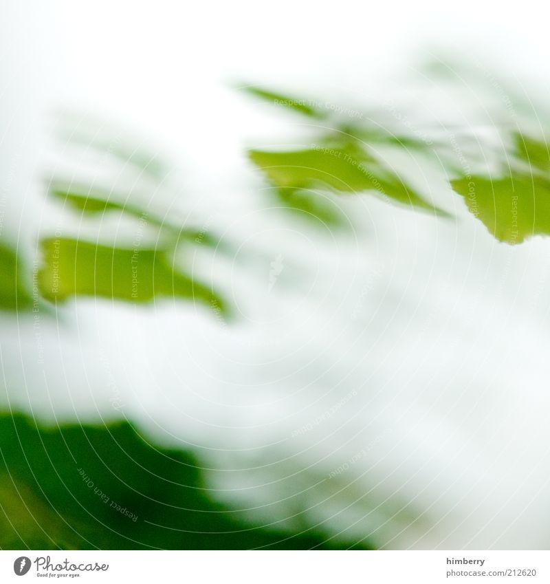 offgrid Natur grün Pflanze Blatt Hintergrundbild Umwelt frisch einzigartig außergewöhnlich Verzerrung Farbfleck abstrakt Blattgrün
