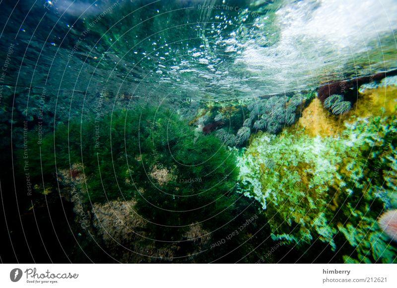 aquaworld Umwelt Natur Pflanze Wasser Riff Korallenriff Aquarium Süßwasser Wasserpflanze Farbfoto mehrfarbig Detailaufnahme Menschenleer Textfreiraum links