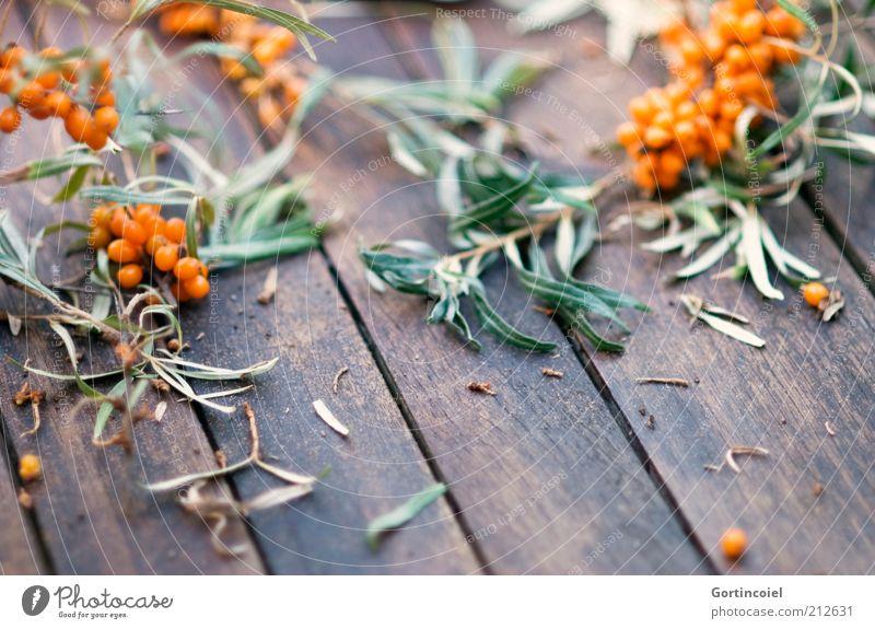 Was übrig blieb Lebensmittel Frucht Ernährung Pflanze lecker Beeren Sanddorn Sanddornblatt Zweig Blatt Beerensträucher Vitamin C Gesundheit orange