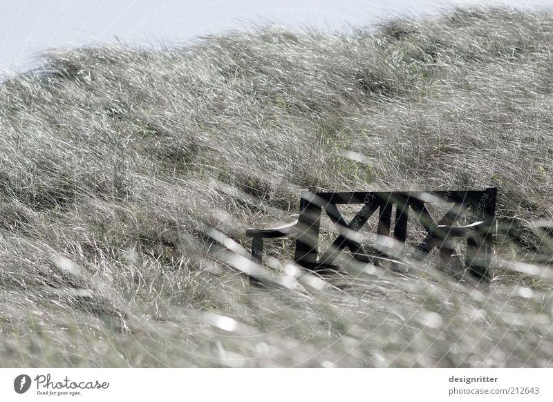 Grasgeflüster Pflanze Ferien & Urlaub & Reisen ruhig Erholung Freiheit Luft Wind Wetter Pause Bank Romantik Frieden Freizeit & Hobby Sturm Stranddüne