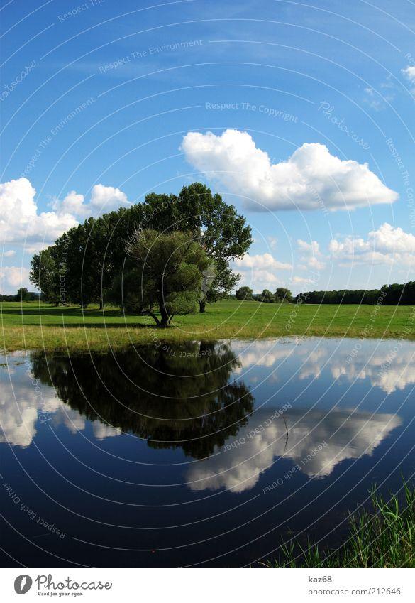 nach dem Regen II Umwelt Natur Landschaft Pflanze Wasser Himmel Wolken Klima Wetter Schönes Wetter Baum Gras Sträucher Park Wiese Seeufer schön Spiegelbild