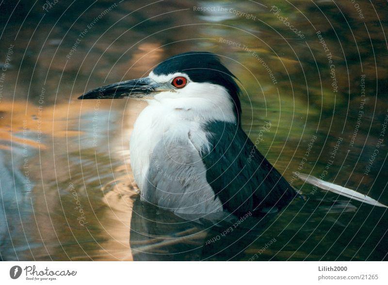 Rotauge Wasser rot Auge Vogel Zoo