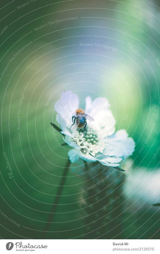 von Bienen und Blumen Natur Pflanze Sommer schön Landschaft Tier Wald Umwelt Blüte Frühling Kunst Wetter Luft Schönes Wetter Flügel