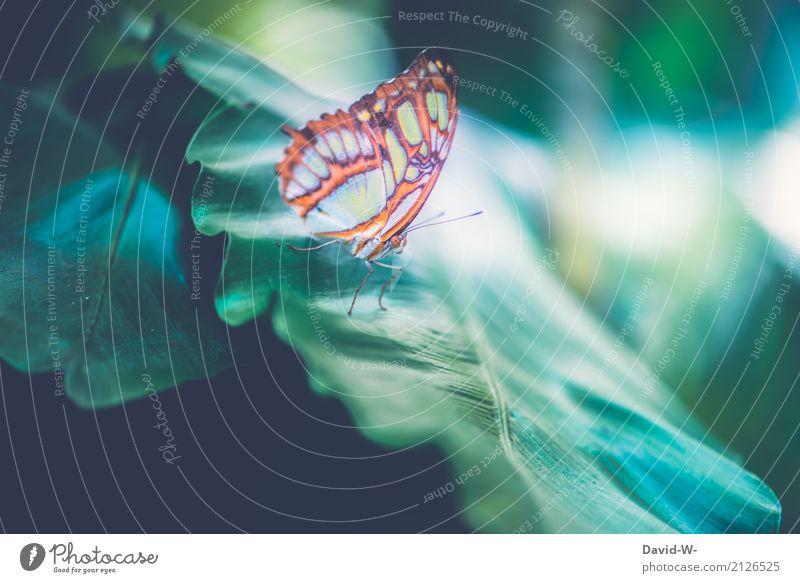 Grüner Falter Kunst Umwelt Natur Landschaft Pflanze Tier Luft Mond Frühling Sommer Sträucher Blatt Grünpflanze Wald Urwald Nutztier Schmetterling Flügel 1