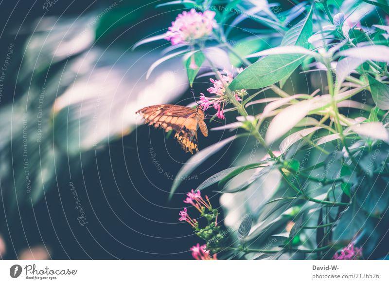 das schmeckt Umwelt Natur Landschaft Pflanze Tier Luft Frühling Sommer Schönes Wetter Blatt Blüte Grünpflanze Park Nutztier Schmetterling Flügel 1 fliegen