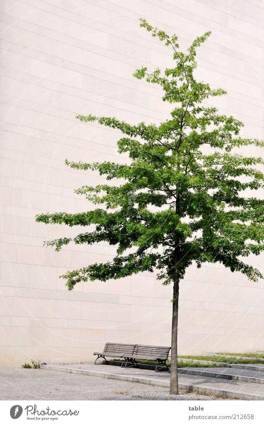 Beton.Bank.Baum Baum grün Pflanze Sommer Einsamkeit Wand Holz grau Stein Mauer Gebäude Beton Fassade Wachstum trist Bank