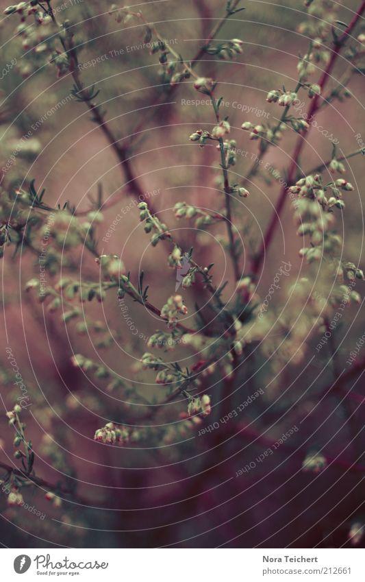 im Inneren Natur schön Pflanze Sommer Herbst Gefühle Blüte Stimmung Umwelt ästhetisch Wachstum Sträucher nah violett natürlich Idylle
