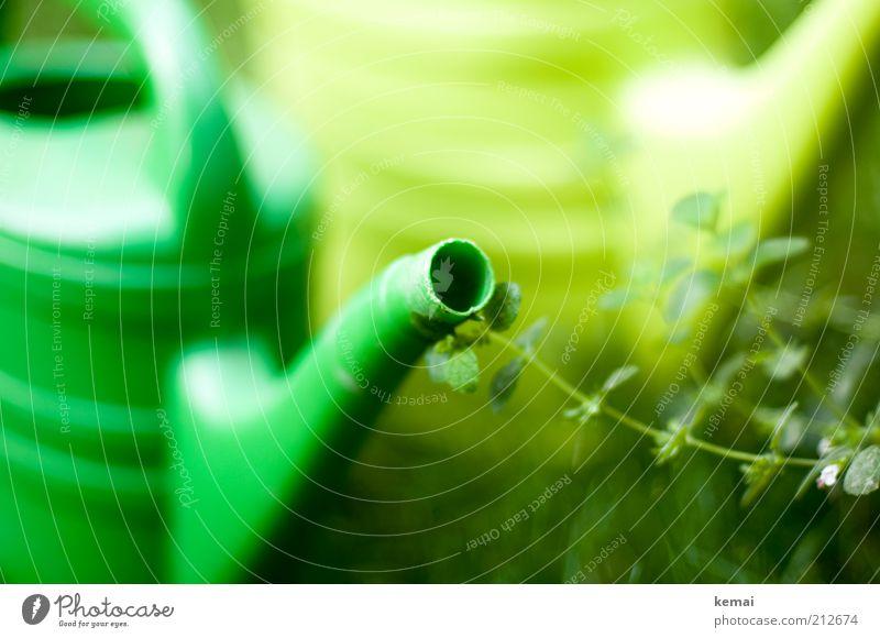 Grün in Grün Umwelt Natur Pflanze Frühling Sommer Klima Wärme Gras Sträucher Gießkanne Gartengeräte Gartenarbeit grün gießen Kunststoff Farbfoto Außenaufnahme