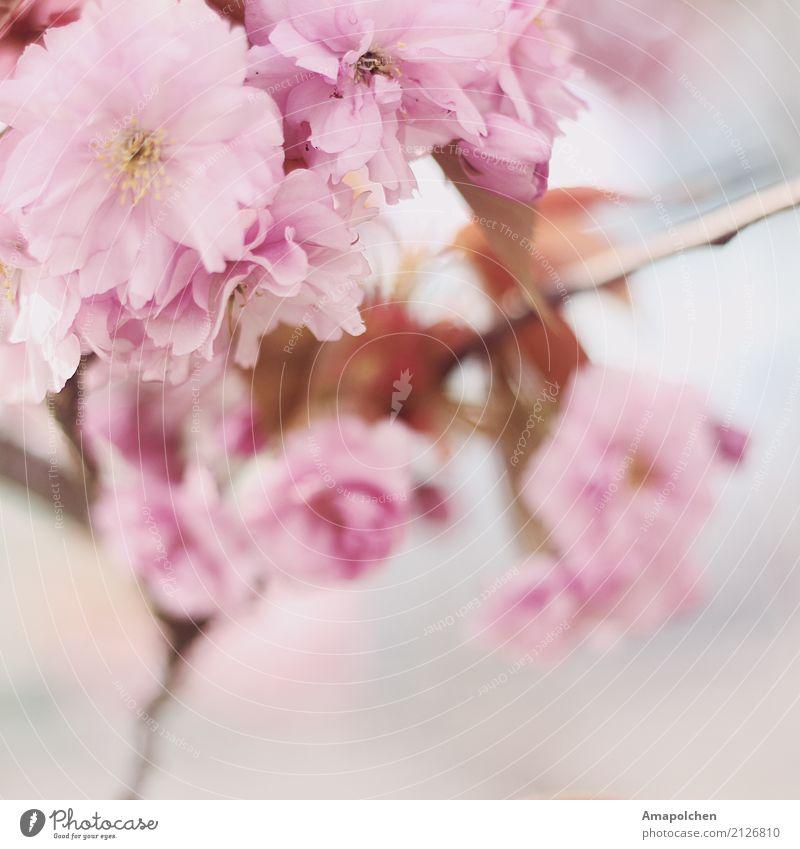 ::17-25:: Natur Sommer Baum Blume Freude Leben Umwelt Blüte Frühling Wiese Glück Garten Park Wetter Geburtstag Fröhlichkeit