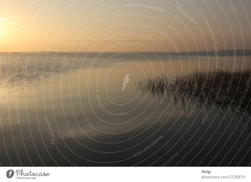 Lebenselixier | abends am Achterwasser ... Himmel Natur Pflanze blau Wasser Landschaft Erholung Einsamkeit ruhig Umwelt gelb Frühling natürlich außergewöhnlich