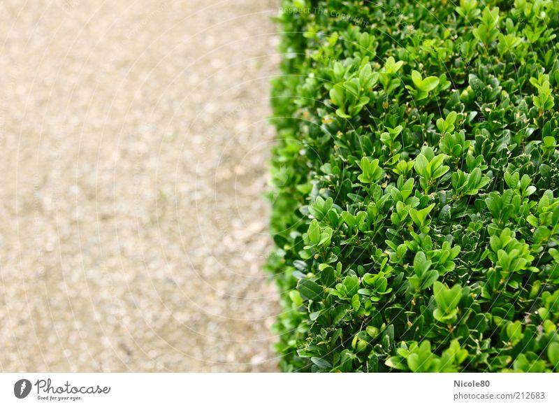 Vegetationsgrenze Natur grün Pflanze Sommer Park Sand Umwelt Ordnung Sträucher Hecke Gartenbau Buchsbaum