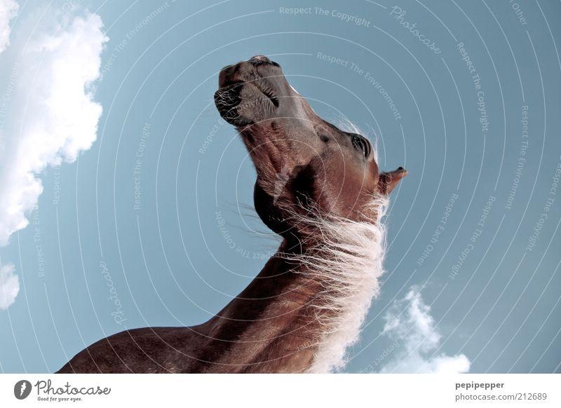 red beauty schön blau rot Sommer ruhig Wolken Tier braun blond elegant groß hoch Pferd ästhetisch Coolness Freizeit & Hobby