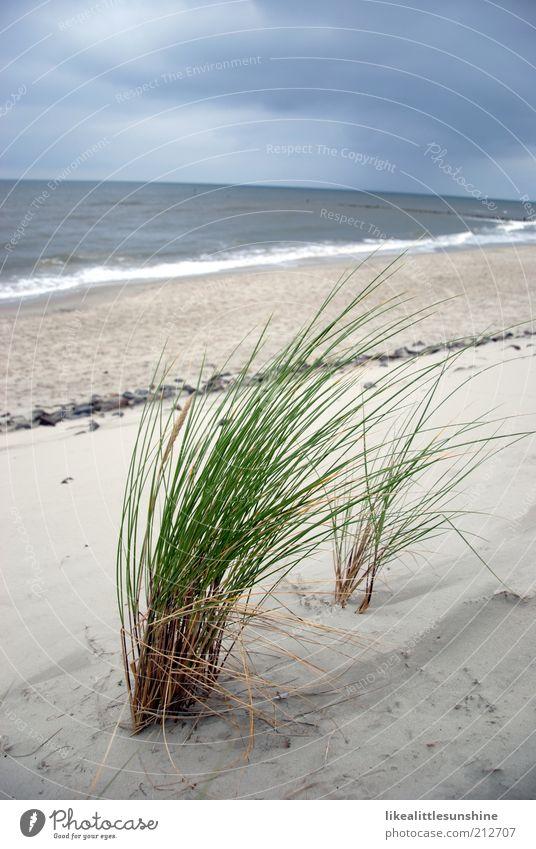 Seegras Natur Wolken Pflanze Gras Grünpflanze Wellen Strand Nordsee blau grau grün weiß Farbfoto Außenaufnahme Menschenleer Tag Wolkenhimmel Ferne Horizont Meer