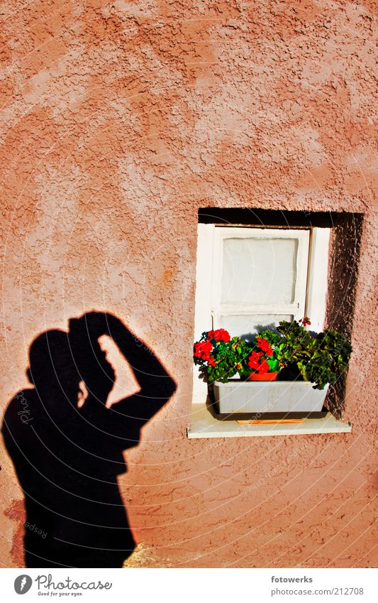 Schatten an der Wand Mensch Mann Blume ruhig Erwachsene Fenster Mauer Kunst Fassade Fotografie maskulin ästhetisch authentisch gut machen