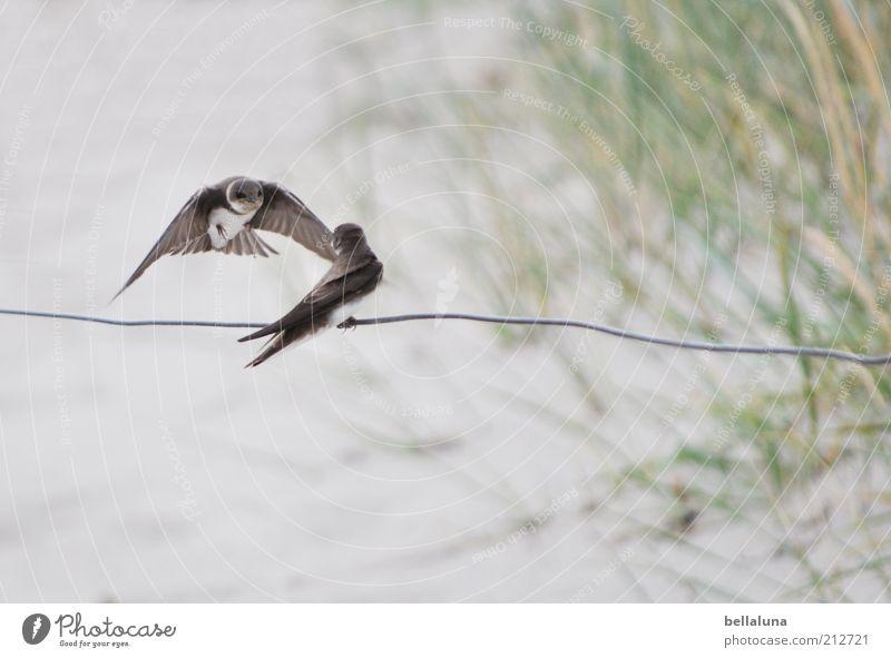 Setz dich, Liebling! Ferien & Urlaub & Reisen Pflanze Sommer Meer Tier Strand Küste Freiheit Sand Vogel fliegen Wetter sitzen Tierpaar Wildtier Insel