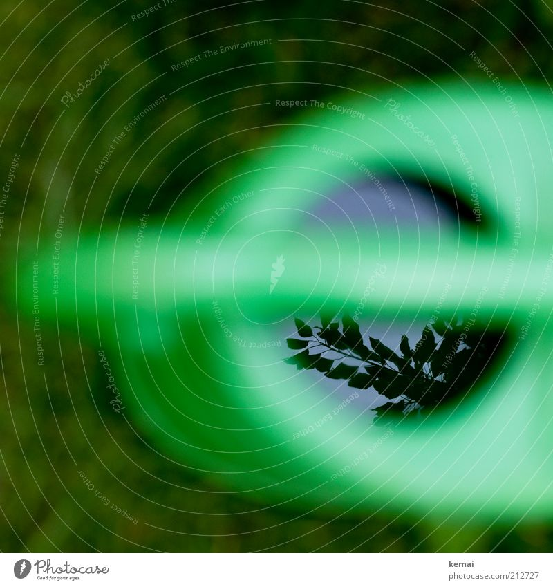 Im Spiegel der Gießkanne Natur Wasser grün Pflanze Sommer Frühling Garten nass Klima Ast Symbole & Metaphern Schönes Wetter Zweig gießen Regenwasser
