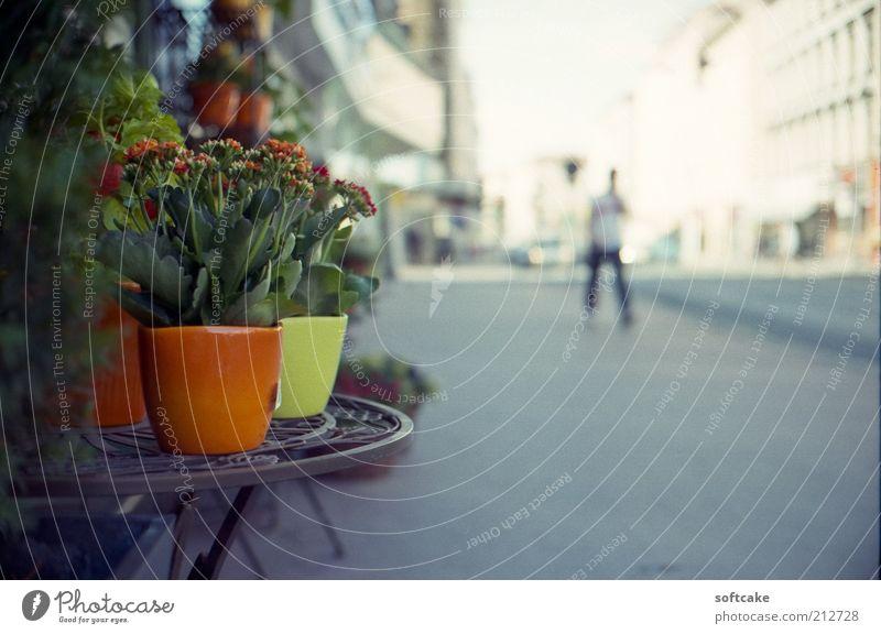 schön weiß Blume grün Stadt Pflanze rot Sommer ruhig gelb Straße Farbe grau Umwelt Europa einfach