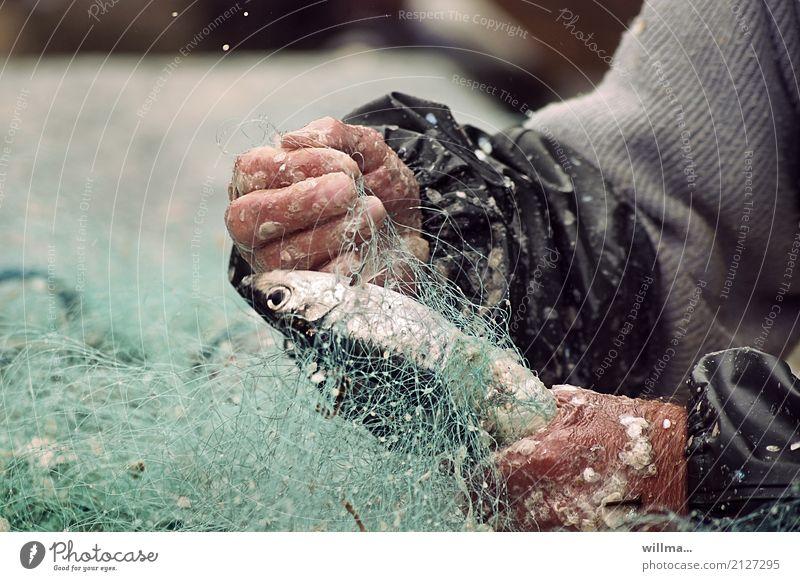 Hände eines Fischer mit Fischernetz und Fisch Fischereiwirtschaft Hand Schuppen Hering Arbeit & Erwerbstätigkeit Mensch