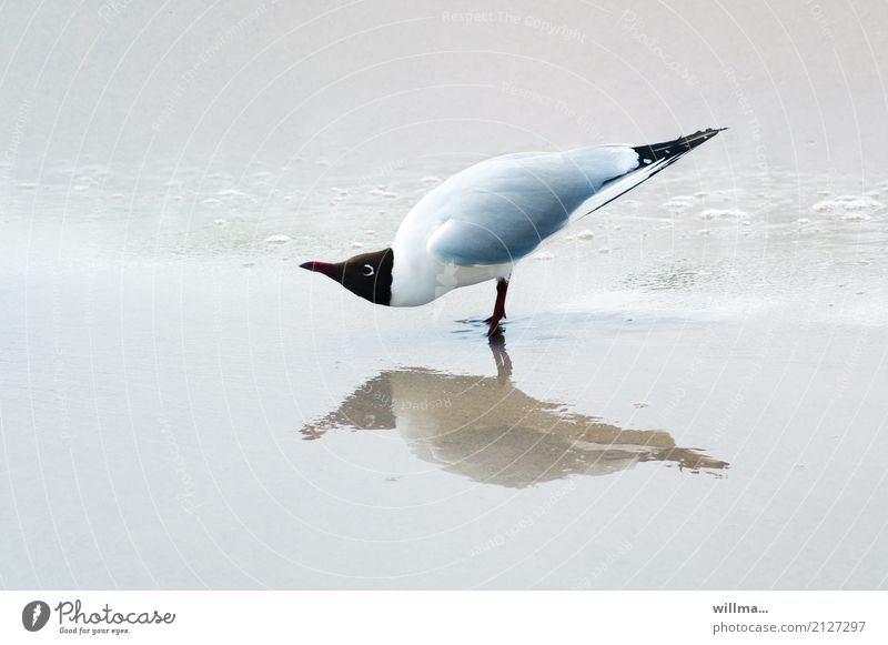 watt??? Tier Strand lustig Küste Vogel stehen beobachten Möwe