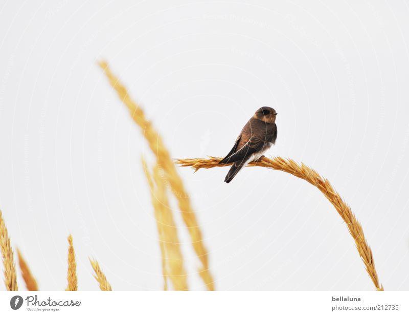 Dinner for one Himmel Natur Pflanze Ferien & Urlaub & Reisen Tier Freiheit Gras Frühling Küste Wetter Vogel sitzen natürlich Wildtier Flügel Schönes Wetter