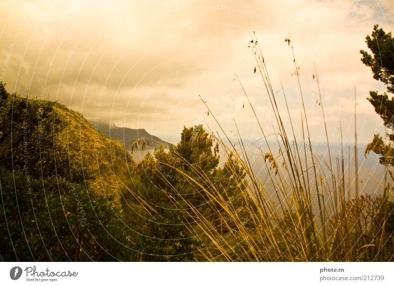 Goldblick Umwelt Natur Landschaft Pflanze Wolken Sommer Gras Sträucher Küste Meer schön Mallorca Halm Farbfoto Außenaufnahme Textfreiraum oben Tag