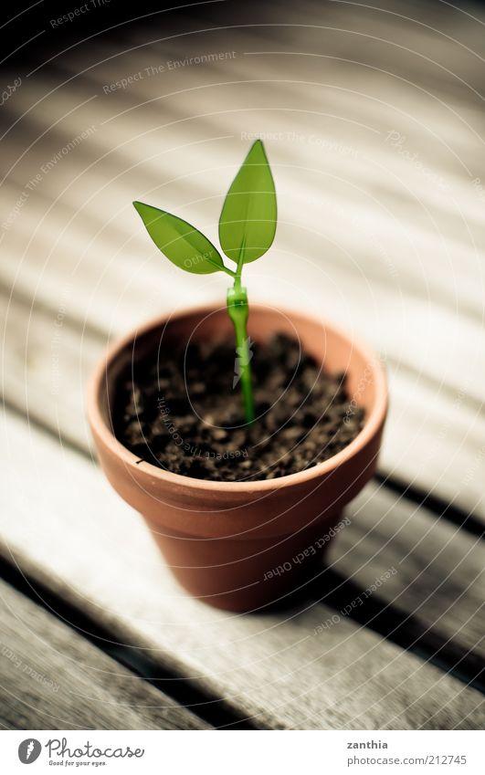 Green IT Natur grün Pflanze Blatt Umwelt braun Wachstum Grünpflanze Textfreiraum Licht Topfpflanze umweltfreundlich Blumenerde