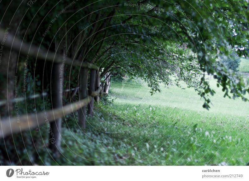 Spaziergang Natur Baum grün Einsamkeit Wiese Park Landschaft Zufriedenheit Hoffnung Sträucher Gelassenheit Weide Zaun Barriere trüb Umwelt