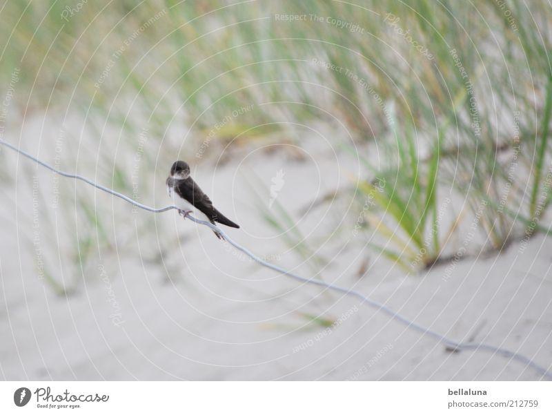 Worauf wartest du? Natur Meer Pflanze Sommer Strand Ferien & Urlaub & Reisen Tier Freiheit Sand Vogel Küste Wetter sitzen Wildtier Düne Ostsee
