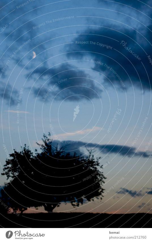 Neumond Umwelt Natur Landschaft Pflanze Himmel Wolken Nachthimmel Mond Sommer Schönes Wetter Baum Grünpflanze Wildpflanze Wiese dunkel blau schwarz Silhouette