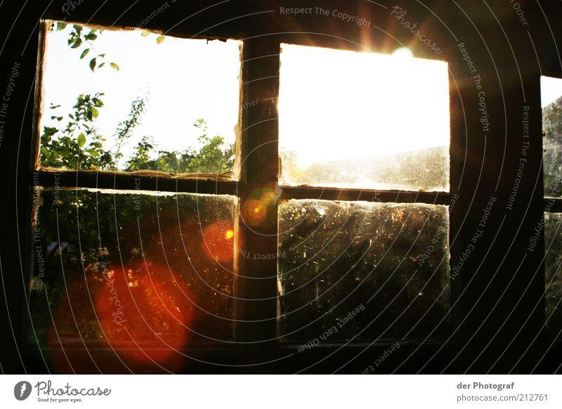 Through the looking glas Sonne Pflanze Fenster Garten Gebäude Wärme Sträucher Sonnenstrahlen Blendenfleck Reflexion & Spiegelung Sonnenuntergang Fensterkreuz