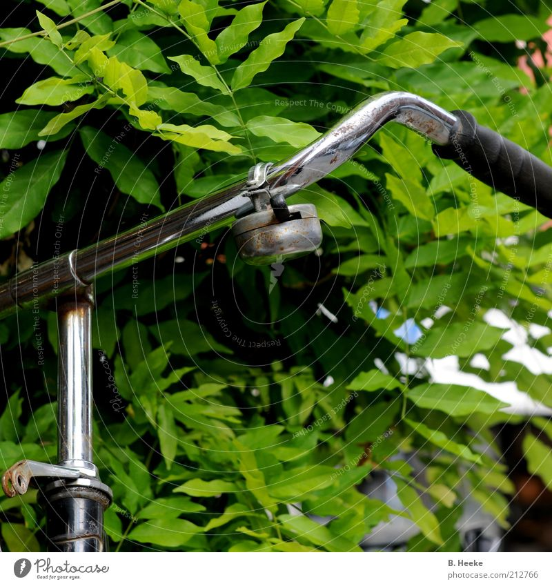 Radl grün Sommer Blatt Freizeit & Hobby Fahrrad glänzend Sträucher Bildausschnitt Grünpflanze Chrom Fahrradklingel Fahrradlenker Handgriff