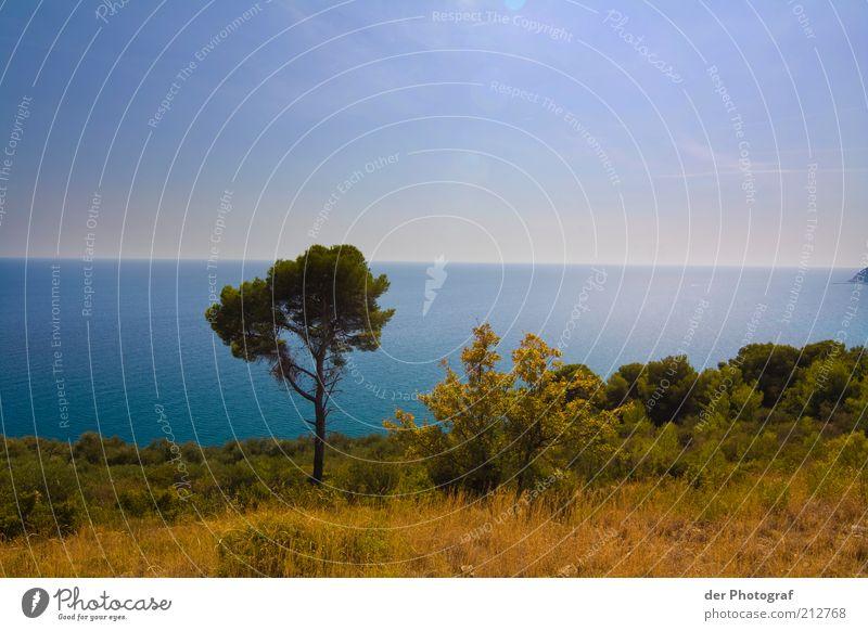 Solitary Natur Baum Meer Pflanze Sommer Einsamkeit Ferne Landschaft Küste Horizont Schönes Wetter Unbewohnt Wolkenloser Himmel