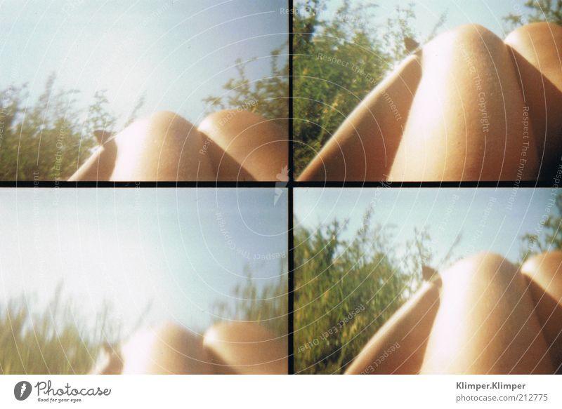Schmetterlingsbeine Himmel Natur Jugendliche schön Pflanze Sommer Erholung feminin Umwelt Wärme Beine Zufriedenheit Haut liegen berühren Schönes Wetter