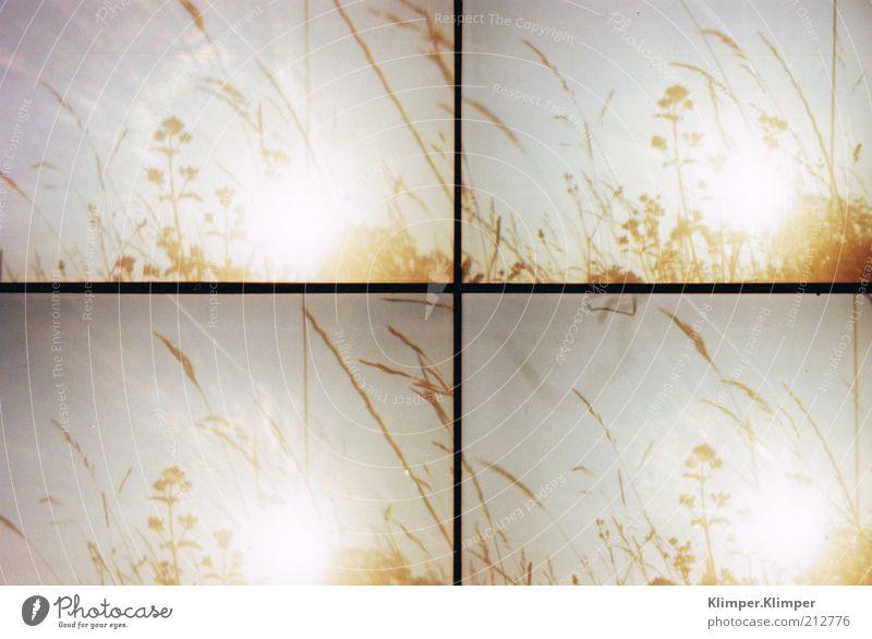 Ebenberg Natur schön Himmel Sonne Blume Pflanze Sommer ruhig Gefühle Gras Zufriedenheit Stimmung Umwelt Halm Schönes Wetter Wolkenloser Himmel