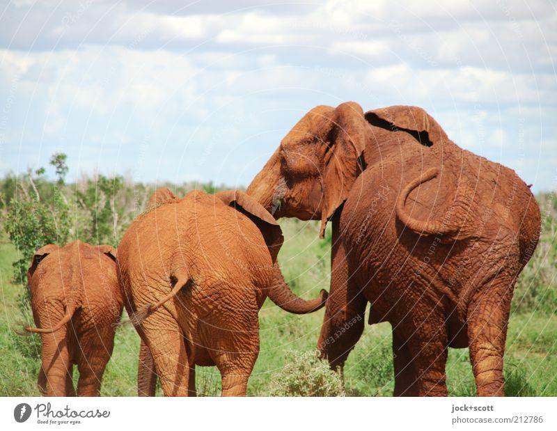 Popo Parade Safari Himmel Wolken exotisch Savanne Kenia Afrika Wildtier Elefant 3 Tierjunges Tierfamilie stehen Zusammensein niedlich braun Gefühle Vertrauen