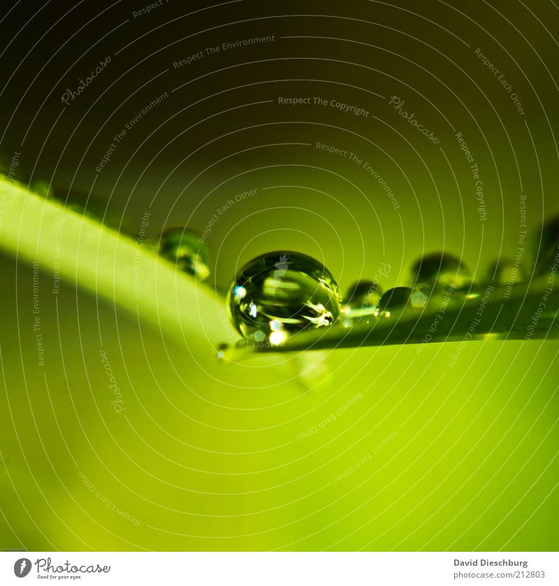 frisch & nass Natur Pflanze grün Sommer Blatt Frühling Regen Wassertropfen rund Tropfen Kugel Tau feucht Grünpflanze Blattgrün