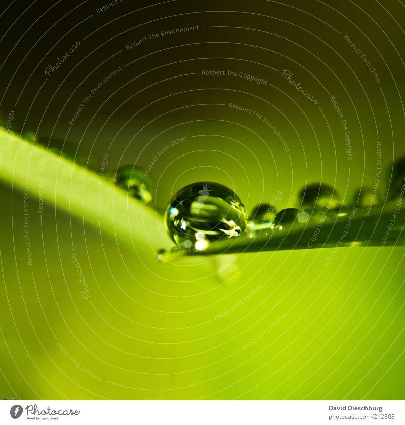 frisch & nass Natur Pflanze Wassertropfen Frühling Sommer Regen Blatt Grünpflanze grün feucht rund Kugel Tropfen Reflexion & Spiegelung Farbfoto Außenaufnahme