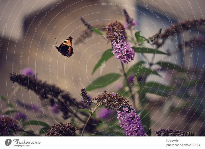 Flieg davon Natur schön Pflanze Sommer Tier Haus Umwelt Freiheit Blüte Garten Bewegung Frühling Stimmung Horizont fliegen ästhetisch