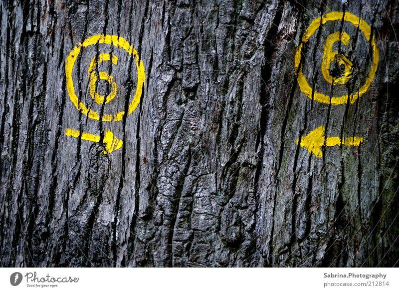 Irrweg Route 6 Natur Baum Pflanze Sommer gelb Erholung Freiheit Umwelt grau Holz Graffiti Schilder & Markierungen Ausflug verrückt wild trocken